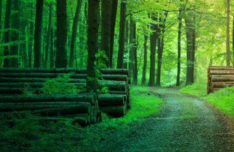 Waldzertifizierung Forest certification